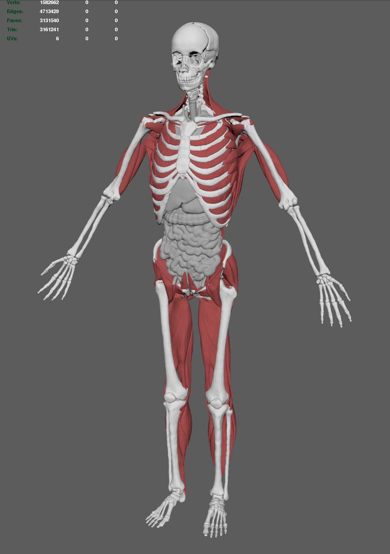 [human_anatomy_04]