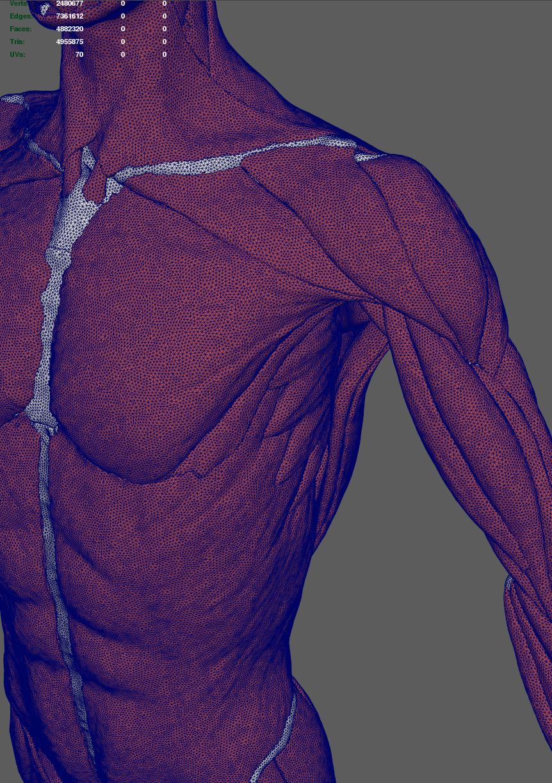 [human_anatomy_07]