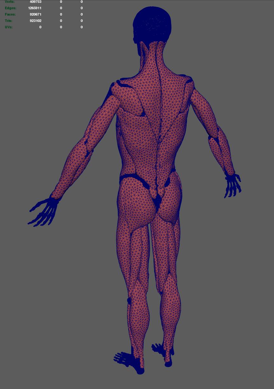 [human_anatomy_14]